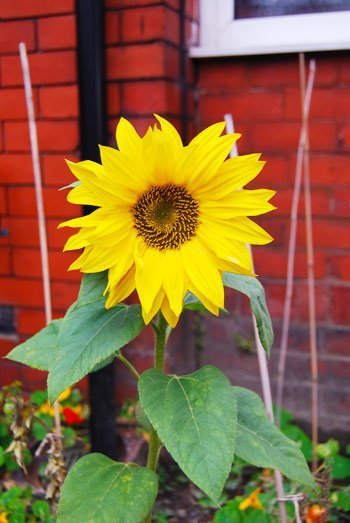 Winter Proofing Your Garden