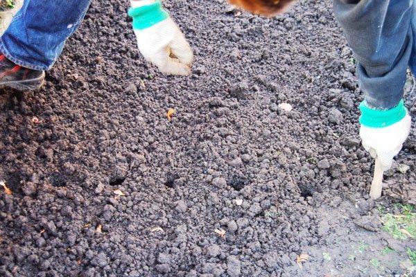 Preparing Soil for Bulbs