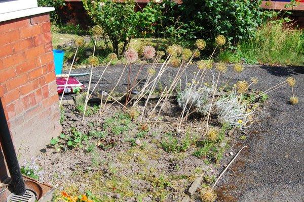 Garden Bed Update