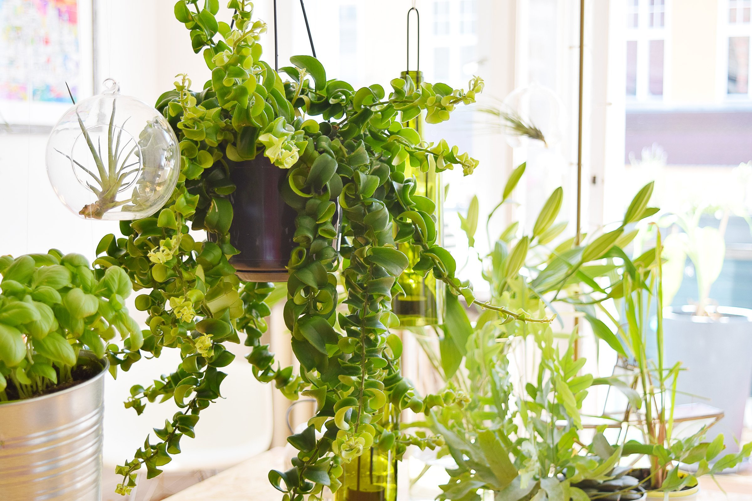 DIY Hanging Garden - Little House On The Corner