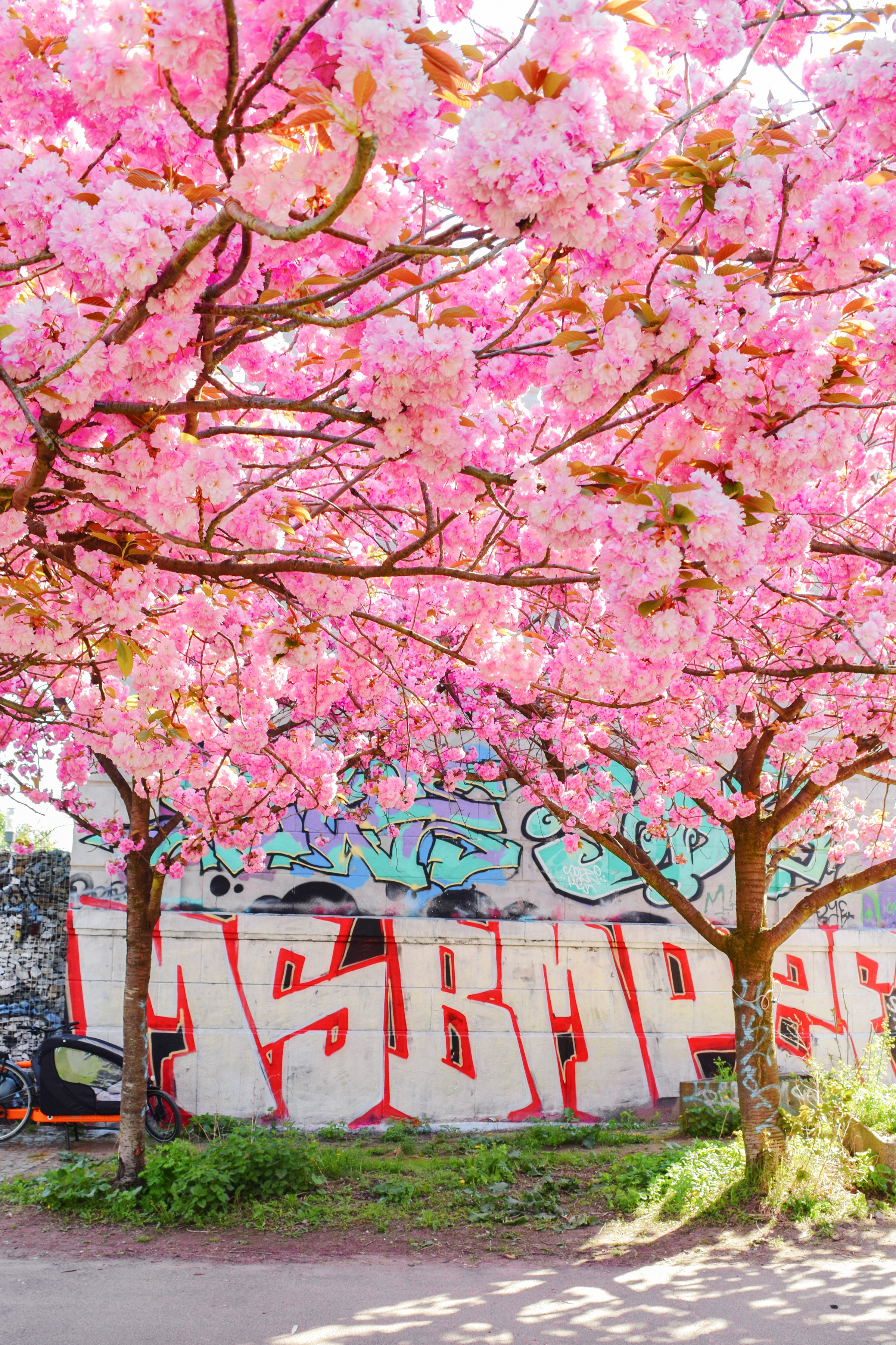 Cherry Blossom in Berlin | Little House On The Corner