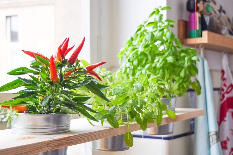 DIY Hanging Herb Garden | Little House On The Corner